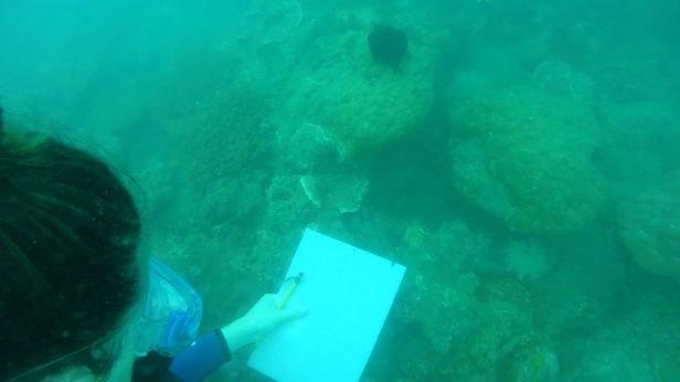 Christa doing a marine survey!