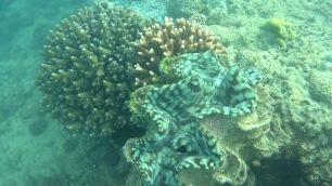 Giant clam!